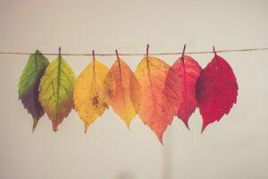 Fall leaves hanging as decor